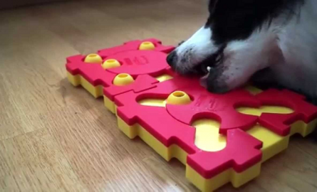 3 Best Dog Puzzle Toys and Games from Nina Ottosson
