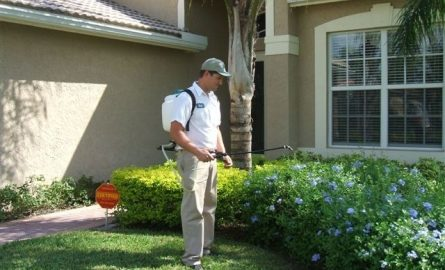 Controlling Pests With Effective Pest Control Services